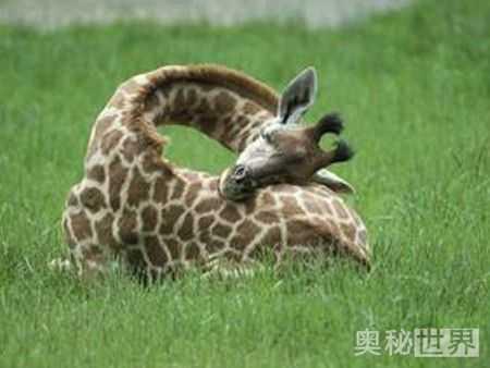 动物的睡觉方法 各种可爱有趣的睡姿