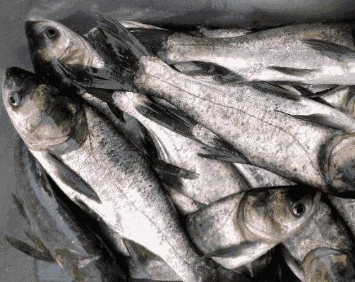 壁纸 动物 美食 肉 鱼 鱼类 503_400