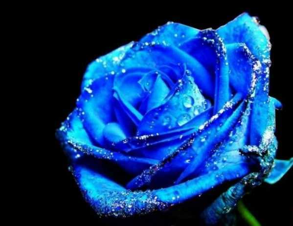 世界上最漂亮的花_世界上最美的花排名