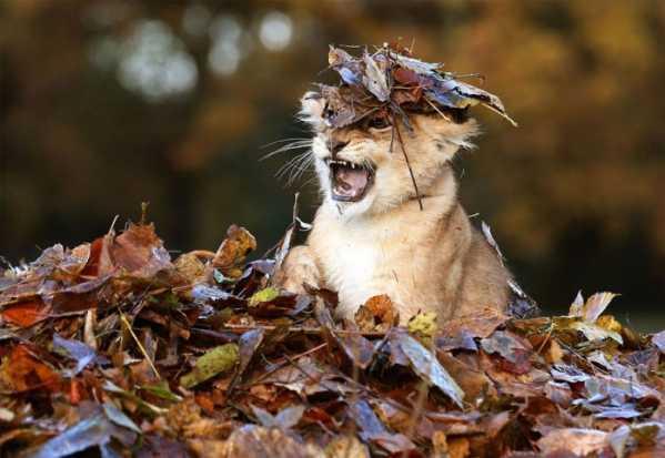 秋天的动物 这些动物都在干嘛